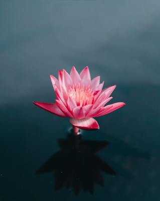 FINDING PEACE THROUGH FORGIVENESS: 5 STEPS TO HELP YOU FORGIVE & RELEASE EMOTIONS THAT ARE HOLDI