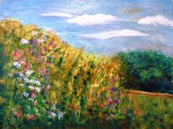 Wild Flowers on Mont Avila