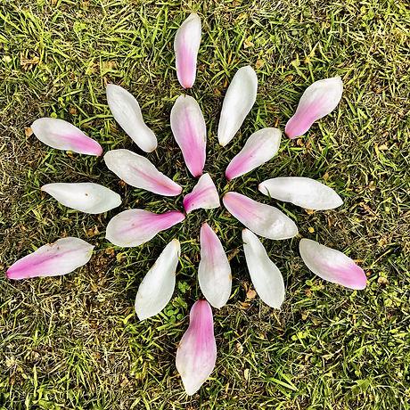 magnolia-petals-5128301_1920.jpg