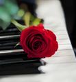 piano&bara.png