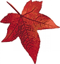 red-maple-leaf.png