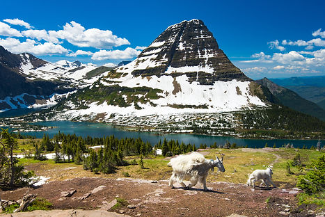 Mountain Goats and hidden lake, Glacier