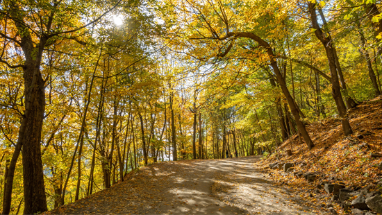Fall foliage in Mont Royal