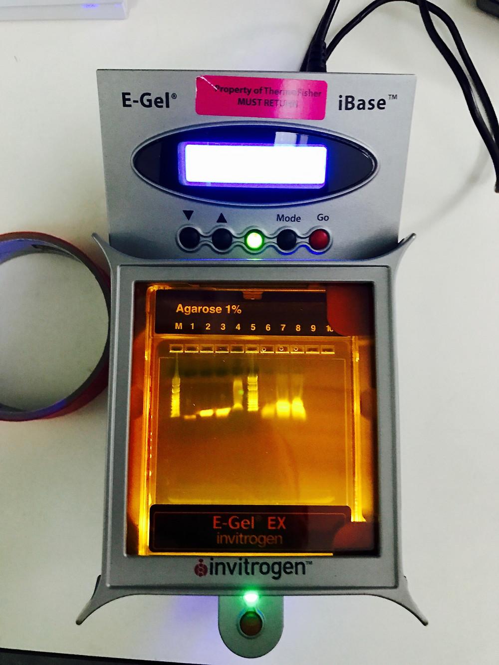Testing E-Gel system at Boslab