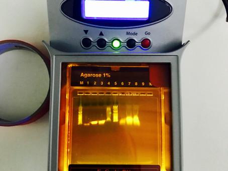 Testing E-Gel electrophoresis system