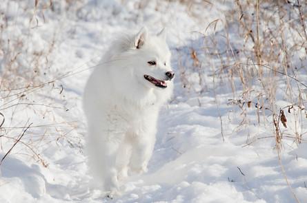 20171104-20171104-Dogs_477.jpg