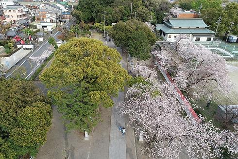 白山神社参道上空(春)
