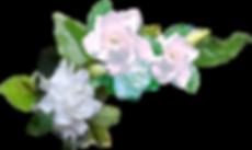 branche de gardenias.png