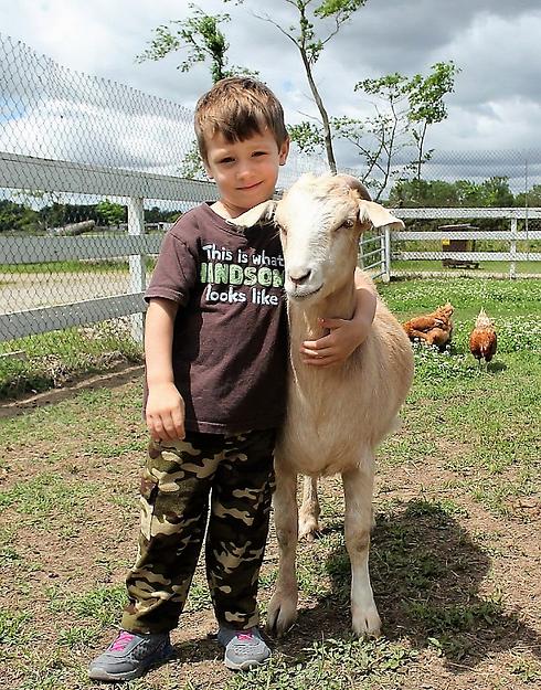 Raising the Farm Animals.png