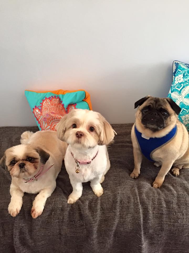 Nellie, Pebbles & Bobbie