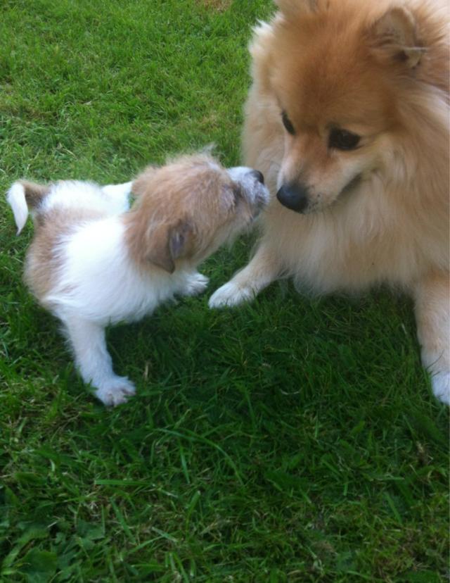 Chico & Bella