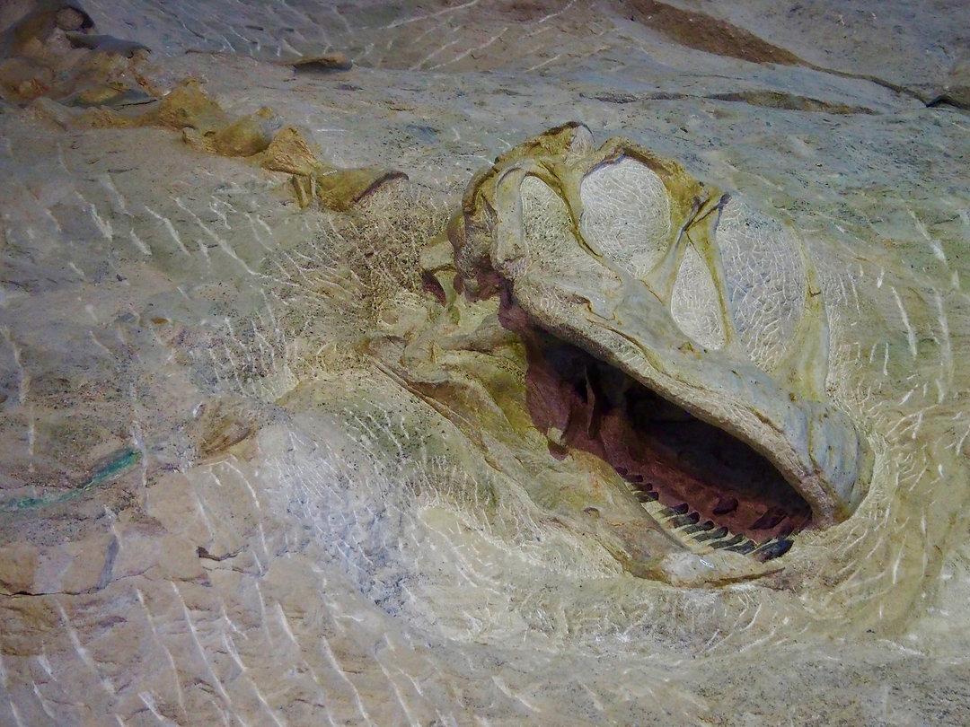 Dinosaur quarry.jpeg