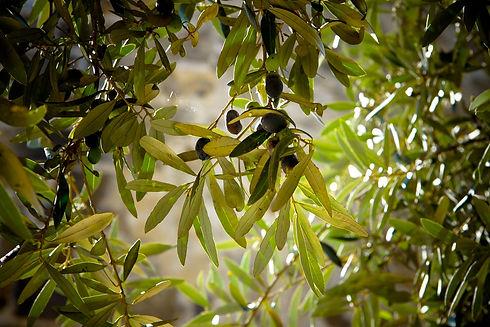 olives-789140_1920.jpg