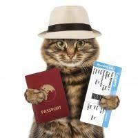 Chat passeport.jpeg