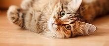 cat friendly clinic 2.jpg