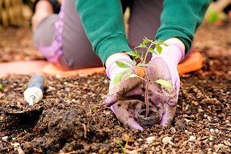 Gardener%20_edited.jpg