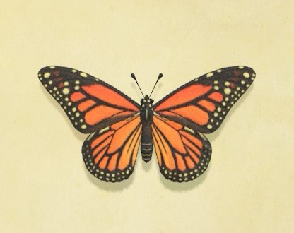 Why are there no butterflies in your garden?
