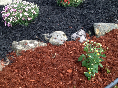 The truth about colored mulches