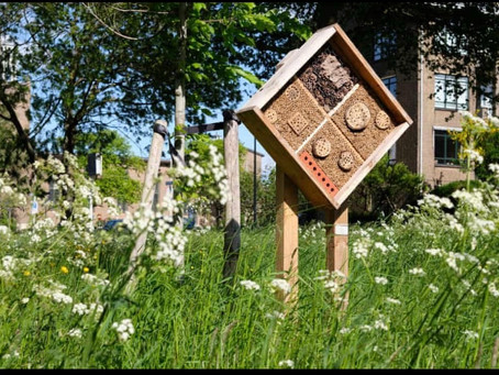 Would you consider installing a bee hotel or bee stop?