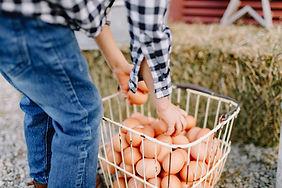 Creston Eggs-1080.jpg
