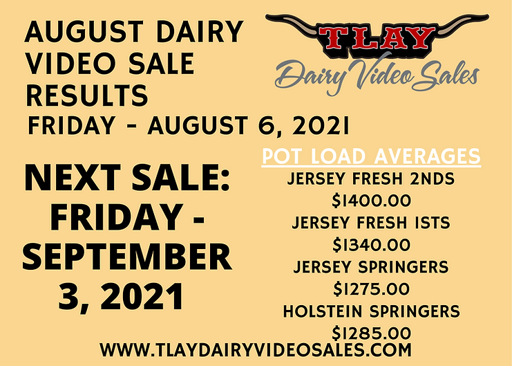AUGUST DAIRY VIDEO SALE RESULTS-2.png