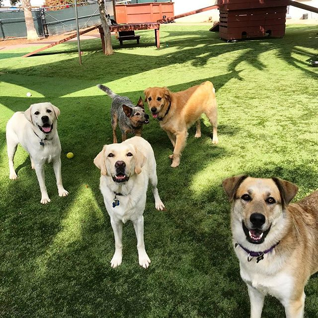 🐾❣️ Daycare Buddies for Life! ❣️🐾 • #s