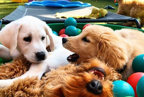 Pups Ballpit