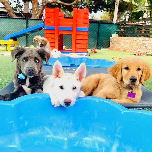 RAINBOW PUPPY PACKAGE