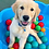 Thumbnail: PUPPY SOCIALIZATION - 23 PACKAGE