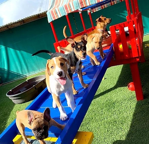 Friday%252520Puppy%252520Sessions%252520are%252520the%252520best!%252520%2525F0%25259F%252598%25258D