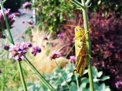 Happy Grasshopper