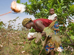 CmiA joins Sustainable Clothing Action Plan