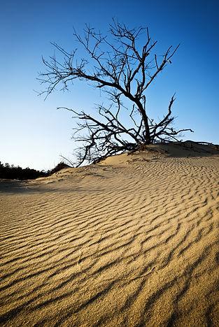 OBX Rippled Sand Dunes Tree Jockeys Ridg