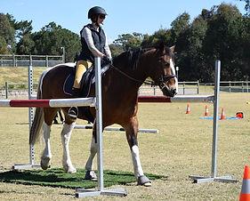 horse19.jpg
