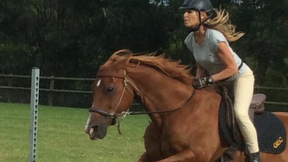 horse13.jpg