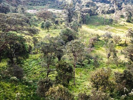 Beautiful valley to enjoy mountains, fields and streams near Podocarpus