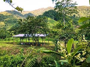 Ecuador Real Estate - Farm.JPEG