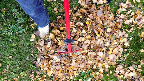 Fall Clean Up Services with South Jersey Ladscaing