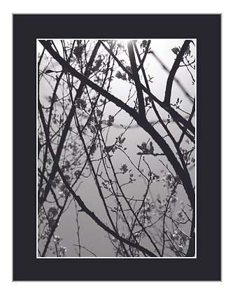 Flowering Branches Print