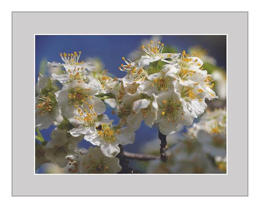 Spring Blooms Print