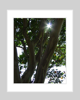 Branches in Light Print