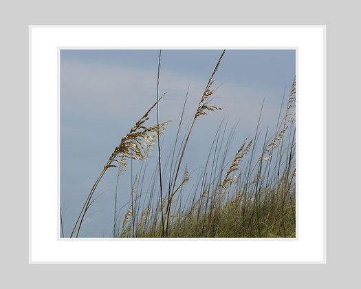 Sea Grass Print
