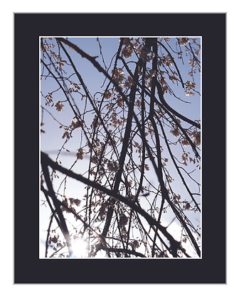 Branches and Blossoms Print