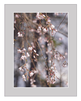 Blooms and Branches Print