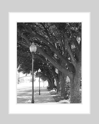 Shaded Street Black and White Print