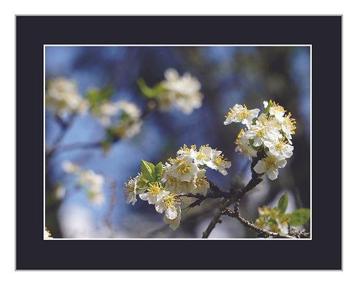 Spring Flora Print