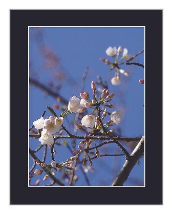 Florets Print