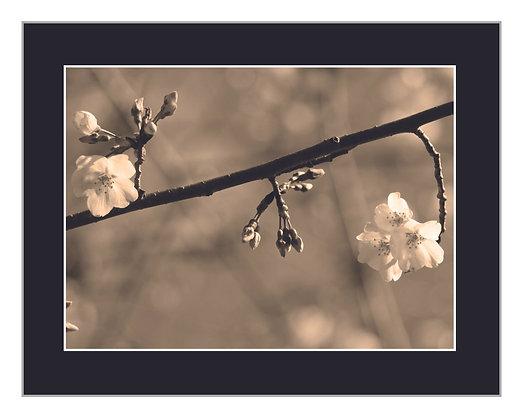 Blooms Sepia Print