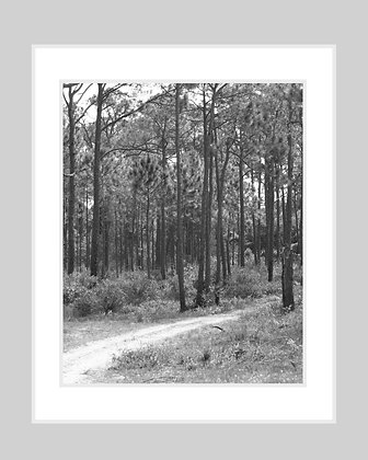 Path in the Pines Print
