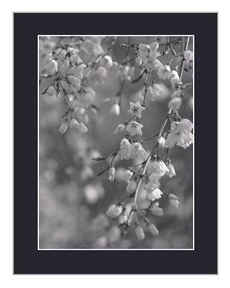 Flourishing Black and White Print